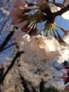 【中野駅徒歩1分40秒ジョブズ トウキョウ】駅近、12名収容、無料wifi標準で割安価格