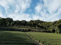 Kaikon 山/茶畑丸々貸切!日本一のお茶の生産地の茶畑山を貸切利用!各種撮影におススメ