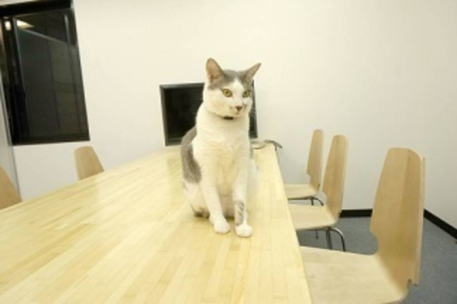 【西武新宿駅北口徒歩1分】かわいい猫とのんびり会議ができる会議室